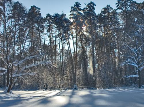 Зимний лес под Казанью